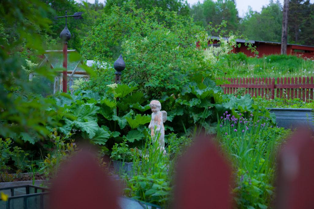 Ängeln i köksträdgården