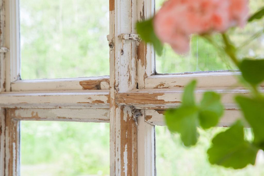 Växthus fönster inifrån