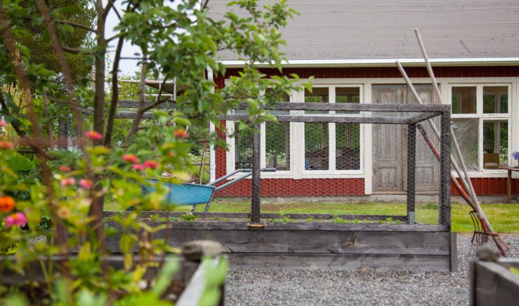 Växthus med Zinnia