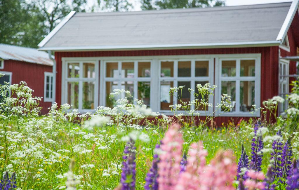 Växthus och lupiner