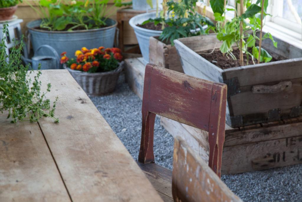 Vinröd stol växthus