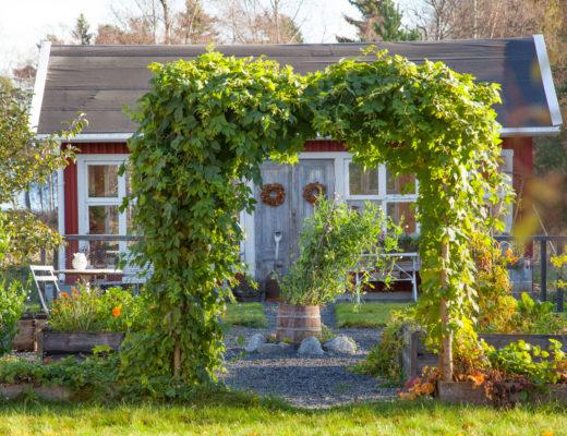 Växthus bakom köksträdgården