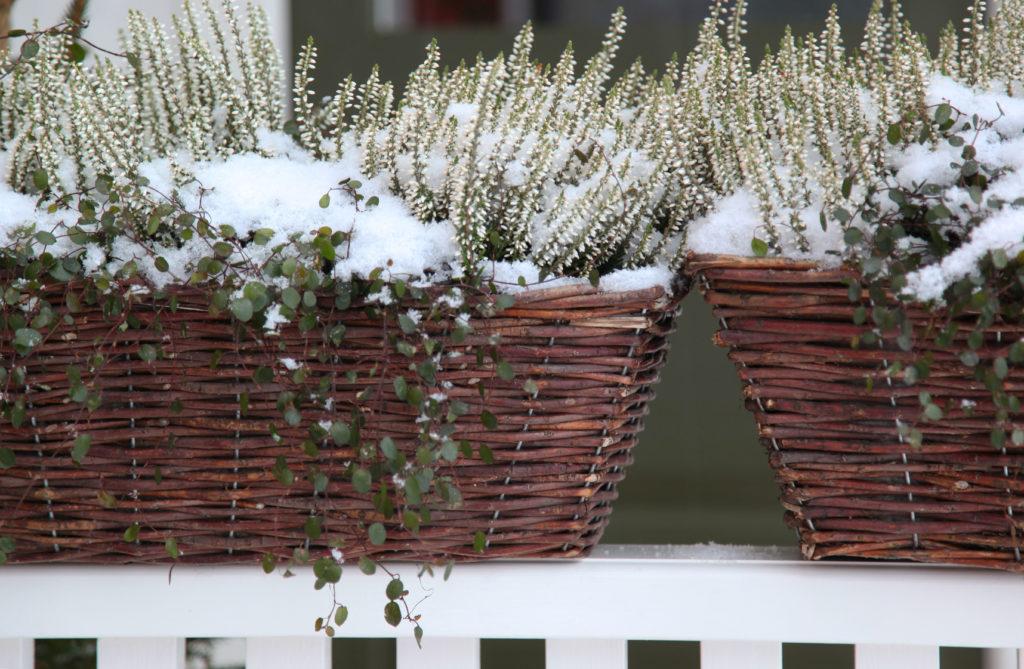 Blomlådor närbild