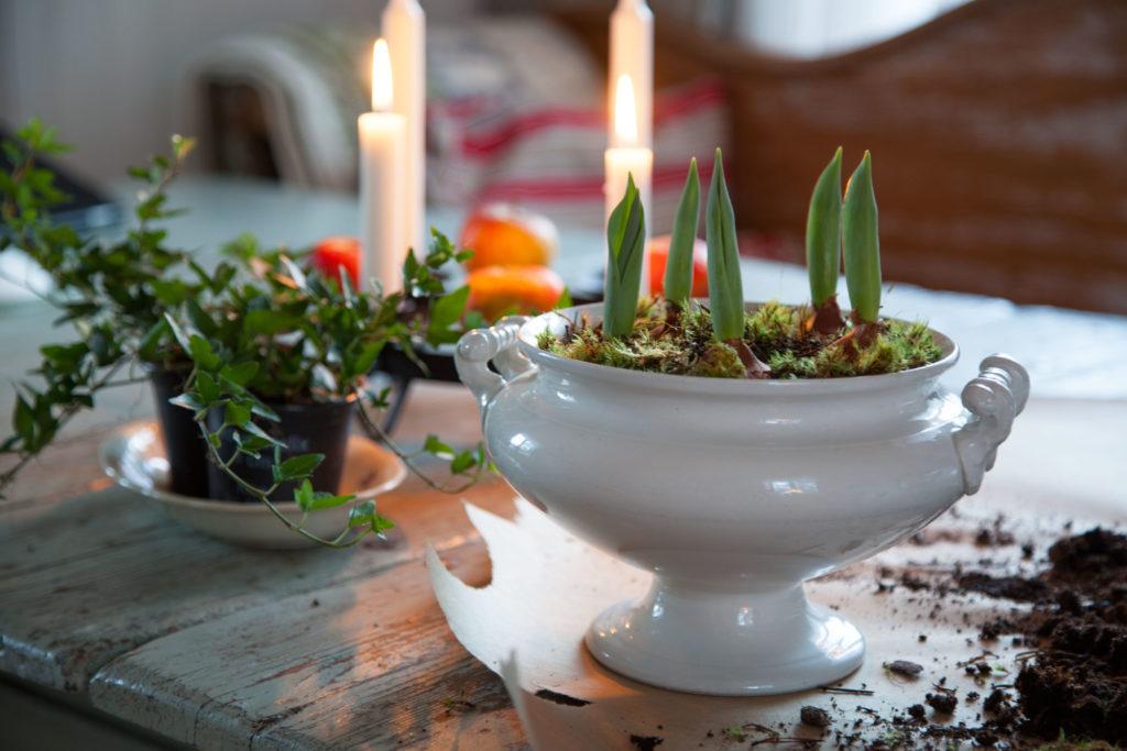 Julplantering i köket