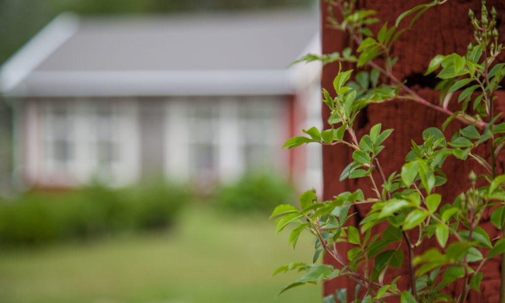 Växthuset runt ladugårdsknuten